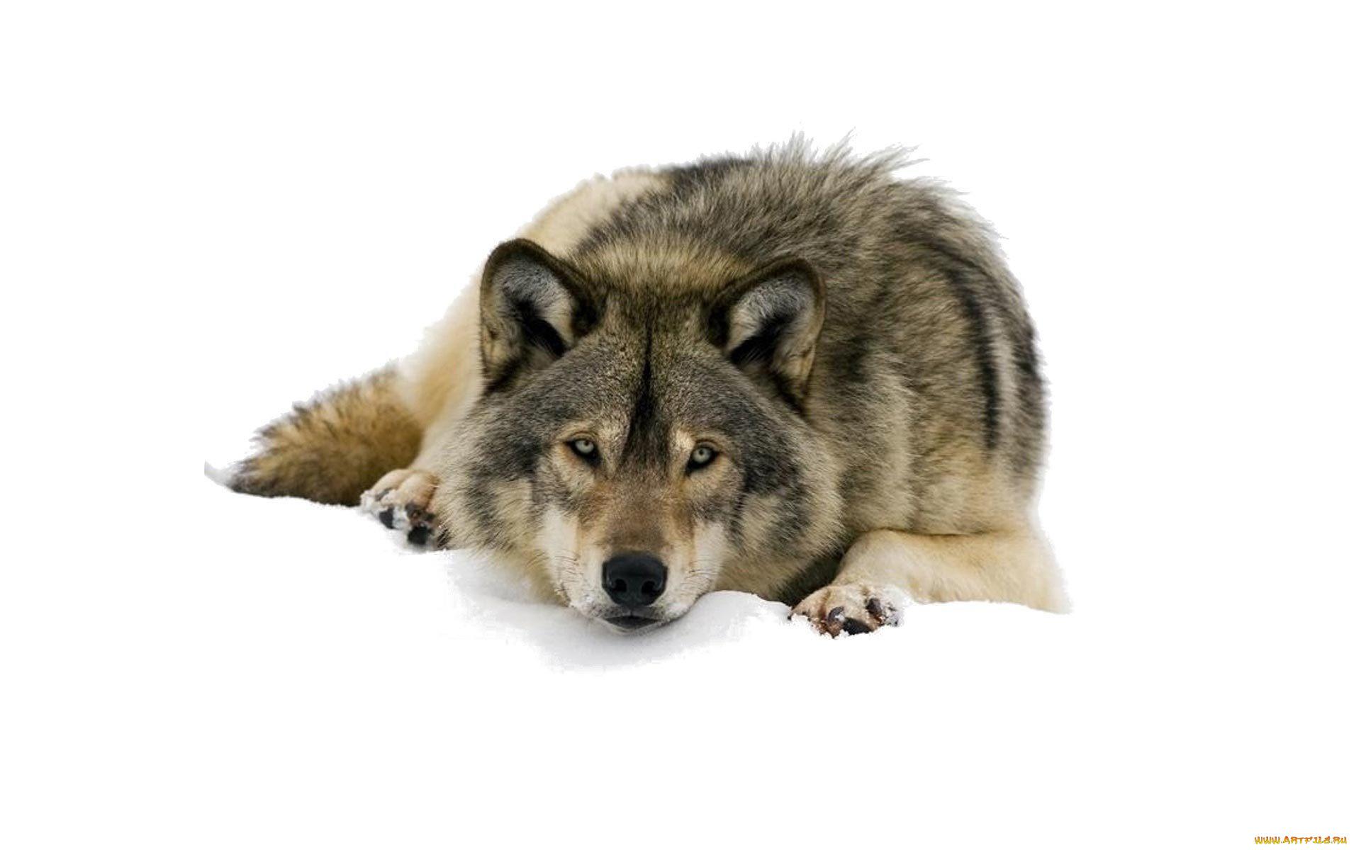 Игра 1700 Игр Работа Не Волк